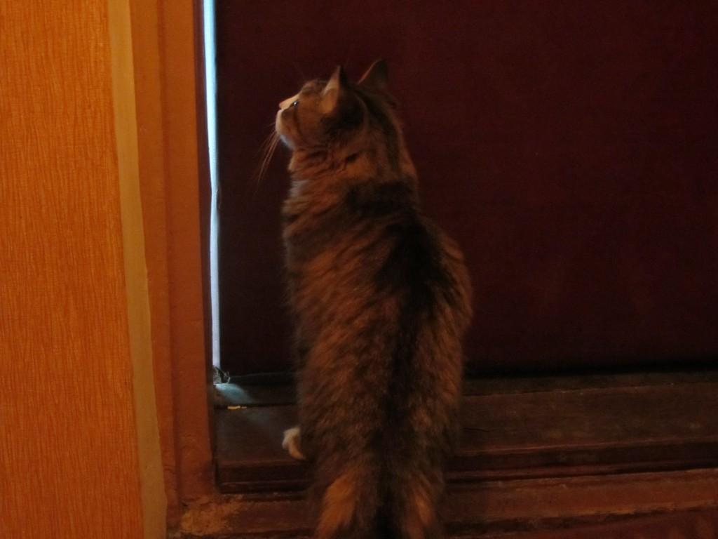 Пессимист перед приоткрытой дверью